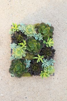 Veritcal Succulent Garden Living Wall Planter Hanging Decor Arrangement Art
