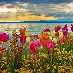 Lago di Garda www.sognoitaliano.it
