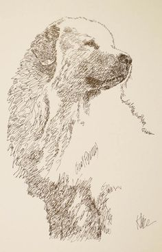 Great Pyrenees: Dog Art Portrait by Stephen Kline - art drawn entirely from the words Great Pyrenees. He also can add your dog's name into the lithograph. drawdogs.com : drawdogs.com His collectors number in the thousands from over 20 countries and every state in the US. Kline's dog art has generated tens of thousands of dollars for dog rescues worldwide.