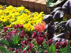 Many flowers, including tulips, are blooming in the Canal Garden at Daniel Stowe Botanical Garden