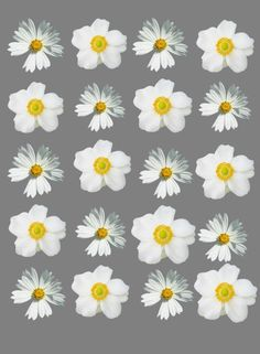 daisy iphone wallpaper 1000 images about iphone on iphone 10480
