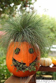 Jack-o-Planterns - Ideas for using Pumkins as planters