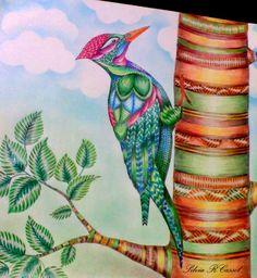 Reino animal by Silvia Cassol @sc8pinterest