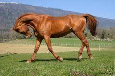 http://www.canailleblog.com/photos/blogs/robe-de-cheval-208667.jpg