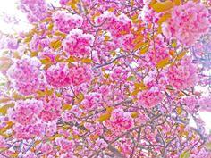 Spring by Tomasz Gabryszak on 500px