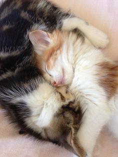 Arthur and Simon asleep