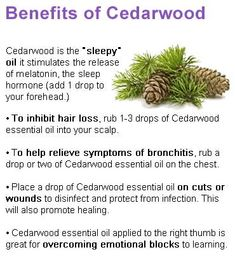 Awesome Cedarwood essential oil!  www.greenlivingladies.com www.mydoterra.com/303320