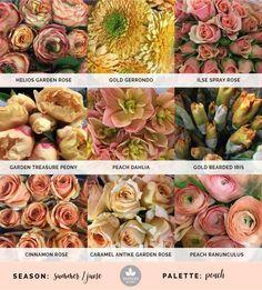 Mayesh Cooler Picks - Summer -   Peach // top: Helios garden rose, gold gerrondo, ilse spray rose | middle: Garden Treasure peony, peach dahlia, gold bearded iris | bottom: cinnamon rose, Caramel Antike garden rose, peach ranunculus