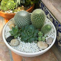 26 Best Succulent Garden Ideas Around The World Mini Cactus Garden, Cactus House Plants, Terrarium Plants, Succulent Gardening, Succulent Terrarium, Cacti And Succulents, Planting Succulents, Garden Plants, Indoor Plants