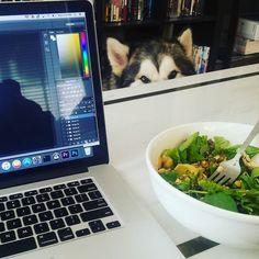 Working lunch today! Healthy delicious and with the threat of danger   #work #workinglunch #photoshop #digital #digitalmedia #dogfriendly #malamute #lunch #healthy #healthyfood #spinachsalad #delicious #threat #funny #dog @brulietmedia @dantethedirewolf