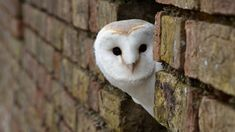 owl HD: 26 thousand results found on Yandex.Images