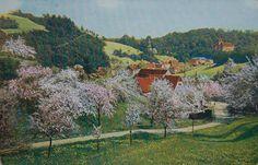 Vaslui - 1920 Romania, Vineyard, Retro, Postcards, Painting, Outdoor, Art, Outdoors, Art Background