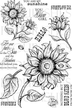 Love the large sunflower with the lady bug and I'd add a butterfly. Sunflower Drawing, Sunflower Art, Sunflower Tattoos, White Sunflower, Sunflower Stencil, Sunflower Clipart, Tattoo Drawings, Art Drawings, Wood Burning Art