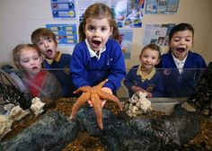 Our 'Rock Pool Experience' is always a huge hit with keen-to-learn students.  http://www.aqualease.co.uk/british-shore-rock-pool-experience/