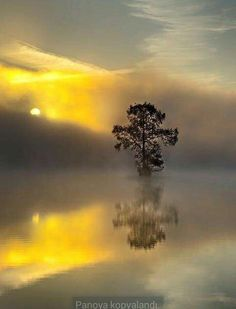 Here's our Mellow yellow photo gallery including pictures of luscious decor, fashion shoes, accessories and nature. Beautiful Sunset, Beautiful World, Beautiful Places, Wonderful Places, Cool Pictures, Cool Photos, Beautiful Pictures, Foto Picture, Mellow Yellow