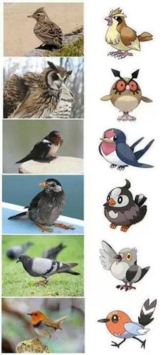 Pokemon Birds that are based on Real Birds