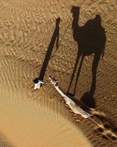 a man leading a camel across the desert sand