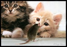 Curious Kittens by Tanja Askani by Realm of Sleep, via Flickr