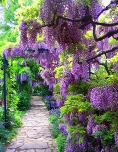 Perfumed pathway, care for a seat?