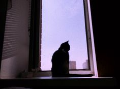 #selfart #cat #pink #window