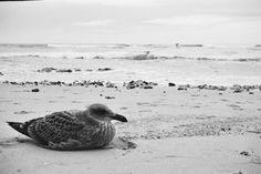 JOHAN BADENHORST Bird, Photography, Animals, Photograph, Animales, Animaux, Birds, Fotografie, Photoshoot