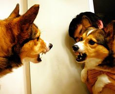 Guess he doesn't like like his reflection....grrr