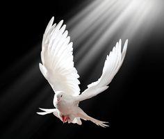 pomba espirito santo - Pesquisa Google