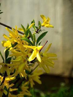 Sárga virágok Herbs, Plants, Herb, Plant, Planets, Medicinal Plants