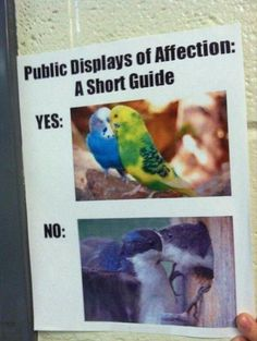 Instructions For Showing Affection In Public