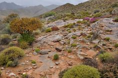 Trip to Richtersveld desert in South Africa by Geology and pictures of landscape. Succulent Species, Succulent Plants, Planting Succulents, Travel Tours, Bouldering, Geology, Granite, South Africa, Shelter