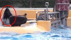 New Footage Shows SeaWorld Orca Slamming Against Gate Over And Over
