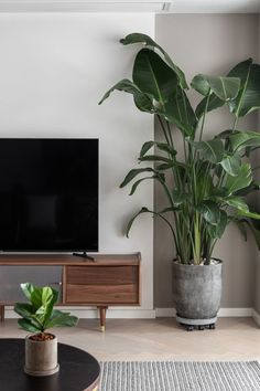 best aesthetic plants birds of paradise Interior Plants, Interior Design, Plant Aesthetic, House Plants Decor, Home Decor Items, Indoor Plants, Decorating Your Home, Living Room Decor, Angry Birds