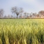 Documentary, Nature and Art photography by Razaq Vance » » Village Landscape And Stunning Beauty Of Spring Light