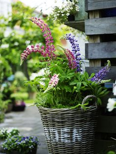 9 of the best ways to add colour to your garden