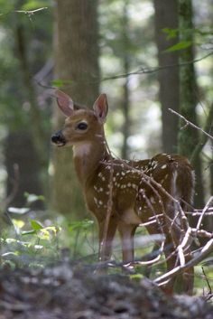 I have 2 of these in my front yard most mornings.