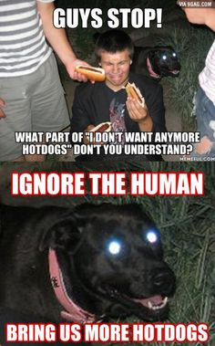 Ignore the human, bring us more hot dogs