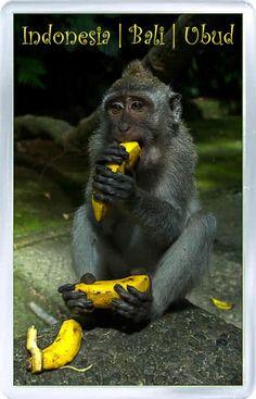 $3.29 - Acrylic Fridge Magnet: Indonesia. Bali. Ubud. Monkey Forest