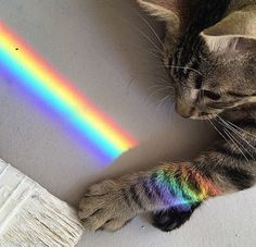 We can become oblivious to the rainbow colors in life...even when they stream right in and touch us...sometimes we need reminded of the beauty all around us. If you like the rainbow colors in this kitty picture, get a rainbow sundial and you can have colors like this in your life every sunny day.