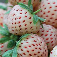 Pineberry Seeds, and other different fruit seeds     ............  Urban Farmer Seeds ....... UFSEEDS.COM