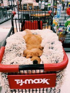 puppies sleeping through the night . puppies sleeping together . puppies sleeping in bed . Baby Animals Super Cute, Super Cute Puppies, Cute Little Puppies, Cute Little Animals, Cute Dogs And Puppies, Cute Funny Animals, Funny Dogs, Doggies, Funny Humor