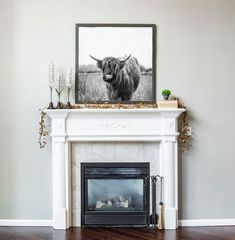 This horned animal is chewing some grass and peering nonchalantly at the viewer from behind his thick mop of messy hair. Striking against a contrasting white backdrop, this chic piece of art is a perfect simple and easy piece to add to any home decor. Black and white highland cow print. #highlandcow #yak #cowart