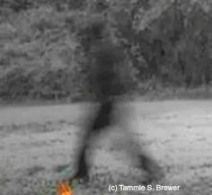Mysterious Trail Cam Image...What Is It?