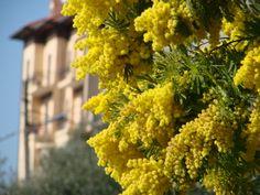 Herbs, Fruit, Spring, Herb, Medicinal Plants