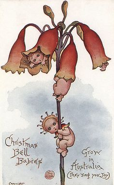 May Gibbs - Australian - vintage fairy postcard Aussie Christmas, Australian Christmas, Christmas Flowers, Christmas Fairy, Christmas Images, Xmas, Bebe Nature, Christmas In Australia, Australian Vintage
