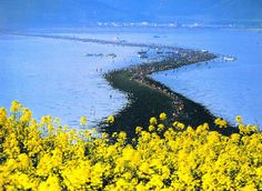 Mysterious dry road in the middle of the sea!  Jindo Island is South Korea's third largest island located off the southwest corner of the peninsula in South Jeollanam-do province. It is host to one of the world's most amazing natural phenomenon called the Moses Miracle. #Weirdworldfacts #OddHistoryandMysteries #HistoricalMysteries