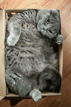 Humano: conseguime otra caja.  No voy a hacer dieta!