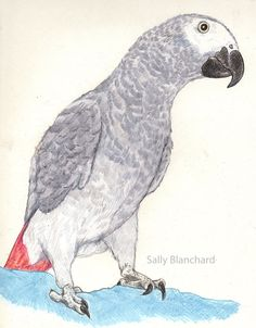 A fairly early portrait of my late great African Grey Bongo Marie (Sold) Parrot Drawing, African Grey Parrot, Grey Art, Christmas Coloring Pages, Rainbow Art, Wild Birds, Christmas Colors, Bird Art, African Art