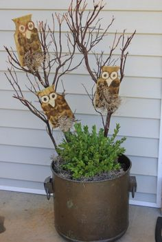 How to Make Wooden Owls  http://daisymaebelle.com/how-to-make-wooden-owls/#
