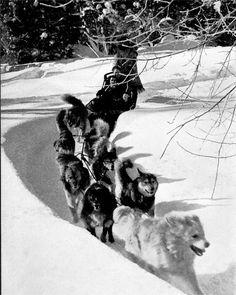 Alaskan Dog Team by Ansel Adams