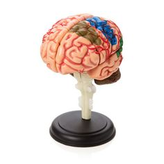 Brain Puzzle on Stand- Small.